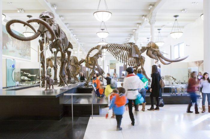 dinosauri al museo di storia naturale di new york