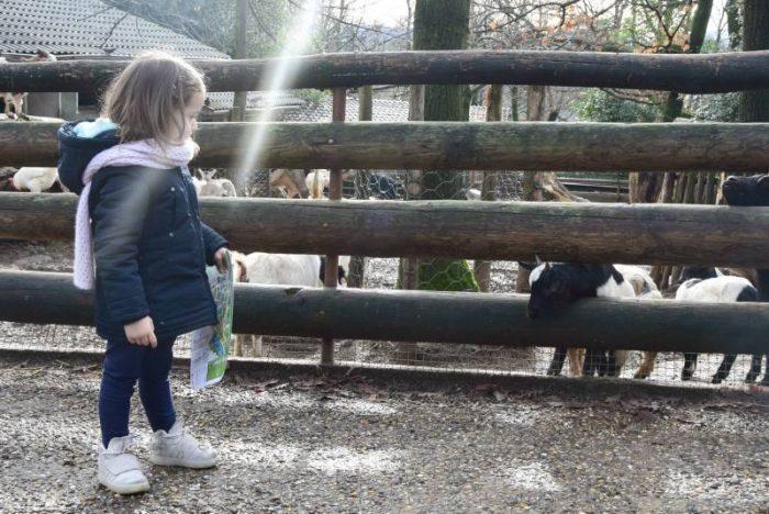 zoo pistoia caprette