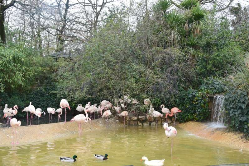 zoo pistoia fenicotteri