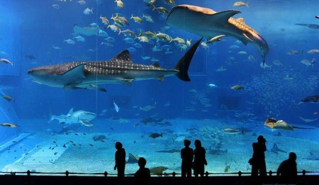 l'acquario di parigi