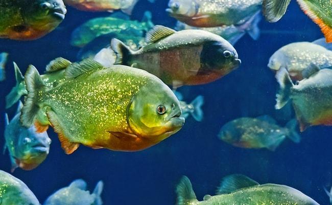 acquario gardaland