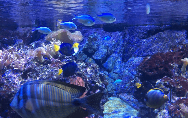 acquario milano